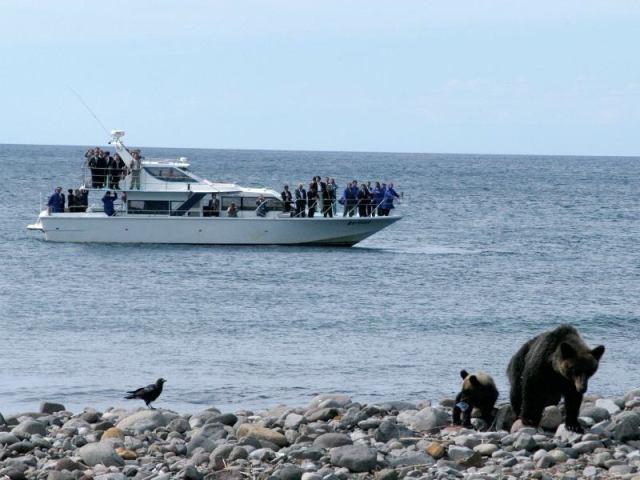知床の真髄を見るなら海から! 観光船クルーズでヒグマウォッチング。